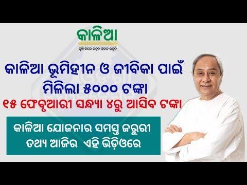Kalia Yojana Credit Rs 5000 On Landless Farmers Bank Account√Important update Kalia farmers