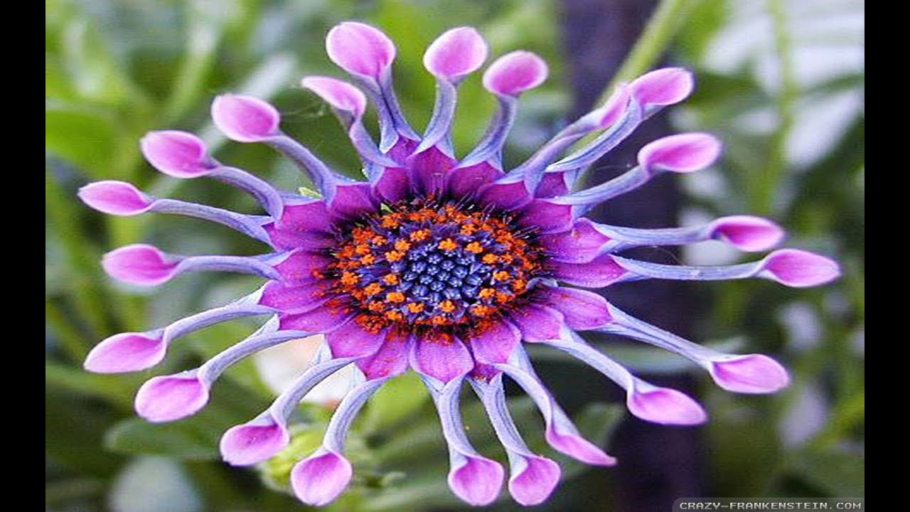 exotic flowers, Beautiful flower