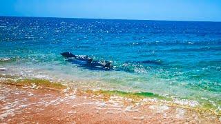 Дельфин приплыл к Людям на Кояшском Озере! Чудо Света в Крыму!