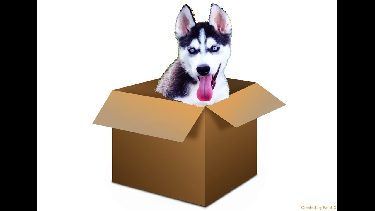 Cute Husky Puppy Plays In A Box! - YouTube