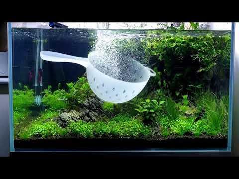 Cleaning My Fish Tank (Timelapse): Betta Aquarium