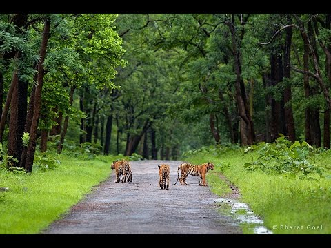 Wildlife of India, National Parks in India - Wildnest