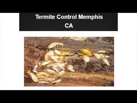 OCP Bed Bug Exterminator in Memphis TN