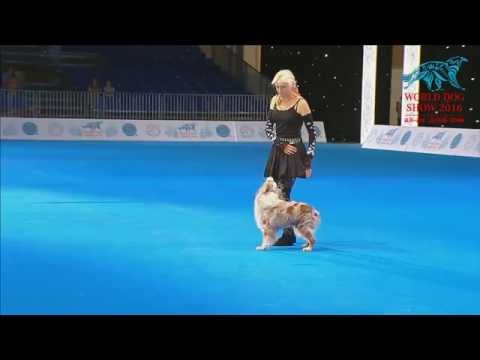 FCI Dog dance World Championship 2016 –Freestyle final - Uta Opel and Dexter (Germany)