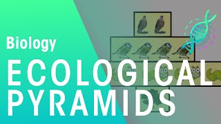 Ecological Pyramids | Biology for All | FuseSchool