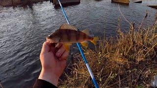 Насадил ЖИВЦА и понеслась душа в РАЙ Отличная рыбалка на поплавок рыбалка на окуня