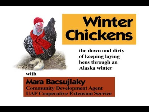 Winter Chickens - The Down and Dirty of Keeping a Laying Flock Through and Alaska Winter