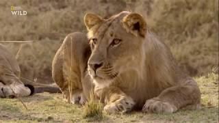 Nat Geo Wild Африканские охотники 2 сезон 1 серия - Испытания Олимбы