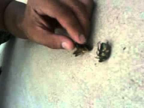 Bug porn