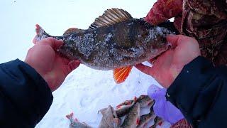 ПОЛОСАТЫЕ БЫКИ ВЫШИБАЮТ УДОЧКУ ИЗ РУК Зимняя рыбалка 2019 2020 Ловля Окуня на балансир