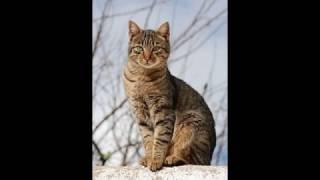 Video datos de animalitos (ruleta activa) download MP3, 3GP, MP4, WEBM, AVI, FLV Juni 2018