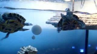 Luka and Leo - Star Wars turtles