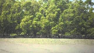 A short trip to Sundarban with