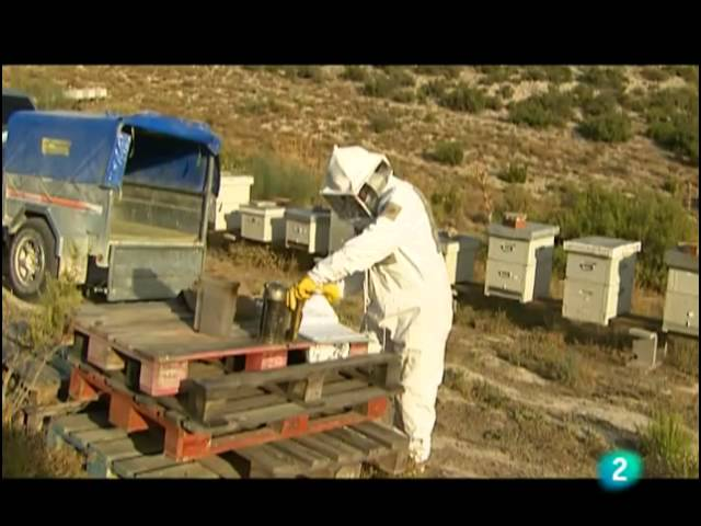 Informe, Un mundo sin abejas
