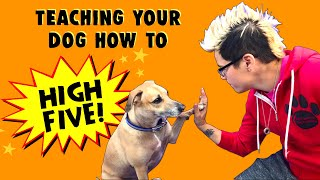 How To Teach Your Dog to High Five - Professional Dog Training