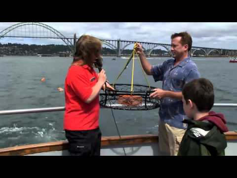 Next Stop_ Newport - Marine Discovery Tours.mp4 Travel Video Guide -HD -TV -PG