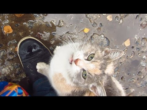 Pregnant cat meows after morning rain