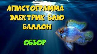 АПИСТОГРАММА ЭЛЕКТРИК БЛЮ баллон