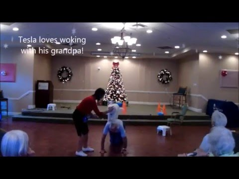 Holiday Trick Dog Shows
