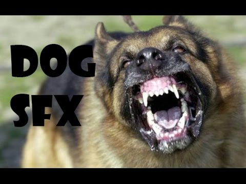 DOG BARKING SFX [FREE DOWNLOAD]