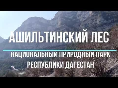 Ашильтинский лес - удивительное место Дагестана   март 2020, туризм на Кавказе