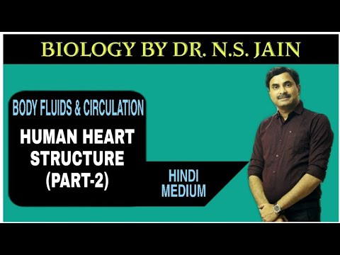 Human Heart - Structure (Circulatory System) Part-2 Hindi Medium