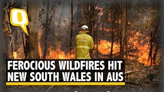 Wildfires Hit Australia's NSW: 200 Homes Destroyed, Intensity Level 'Emergency'