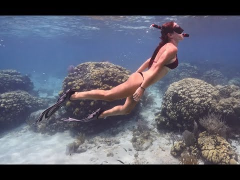 BEST CAYMAN ISLANDS shallow water reef DIVE