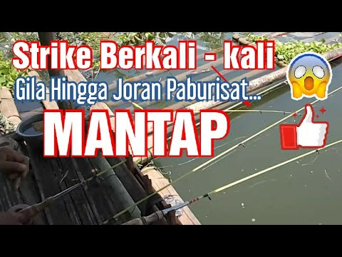 Serangan ikan nila mantul ( mantap Betul ) spot Jatiluhur ...