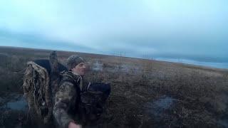 весенняя охота на гуся 2016 .Много налетов.goose hunting. a caccia d'oca(Весенняя гусиная охота.видео с нескольких охот.Много налетов и добытых гусей.Ружья двустволка иж-58,полуавт..., 2015-05-09T12:03:14.000Z)