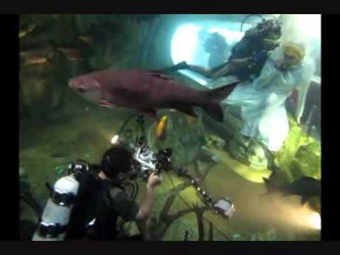 Malaysia Underwater Studio Freshwater Aquarium,National Science Centre