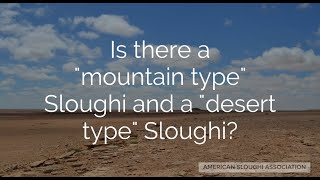 Sloughi Facts:  Mountain or Desert Type Sloughi?