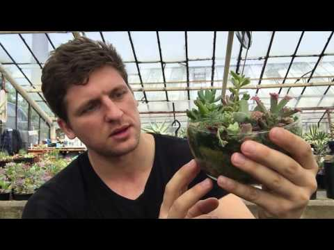 Композиции из суккулентов - садики в горшках и флорариумах