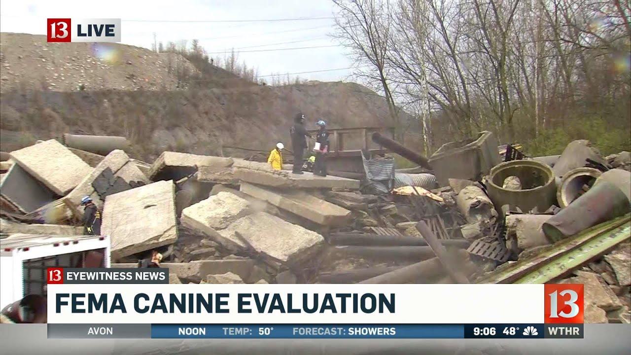 FEMA search dog certification (9AM)