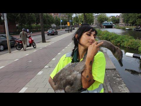 Directly helping animals with the Animal Ambulance Amsterdam | Vegan Amsterdam