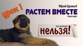 [Урок 1] Как щенка отучить КУСАТЬСЯ. Команда НЕЛЬЗЯ (ФУ)