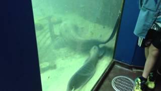 Kæmpe-malle flytter ind på Aqua