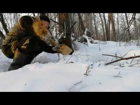 Вопрос: Какие есть документальные фильмы про енотовидную собаку?