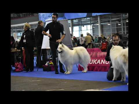 Exposition Canine International  Genève 2017