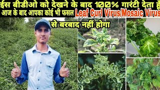 100% Treatment of Leaf curl virus in all vegetable crops Like, Chilli, Tomato, Capsicum, Cotton etc.