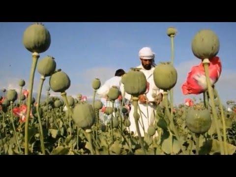 Crece producción afgana de opio