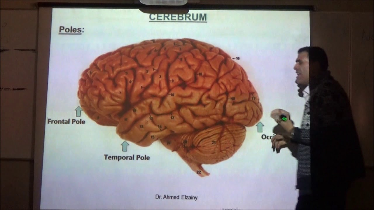 Anatomy Lecture Of The Cerebrum Drahmed Elzainy Part 1 Youtube