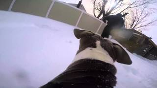 Gopro Hero 4 Silver With The Gopro Fetch Harness Snow Run