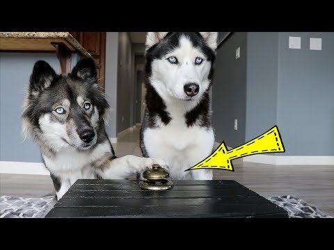Ring the Bell, Get the Treat!