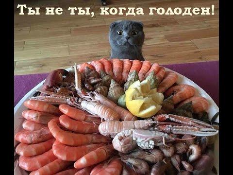 Ты - не ты, когда голоден! © Pandda.me