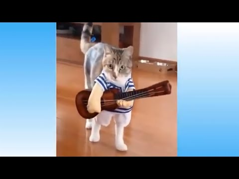 Best Cute and Funny Animals - Try Not To Laugh To These Pets Compilation #1 - Cute Animals