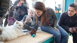 New York City Gets a Cat Cafe