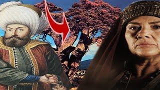 Hayme Ana'nın Osman Gazi'yi Sallayıp Uyuttuğu Ağaç ''Diriliş Ertuğrul''