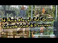 Anis Merah  Ekor Adu Gacor  Mp3 - Mp4 Download