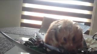 Slow hamster photo shoot 🐹📸